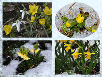 Spring impressions in the snow - Frühlingsimpressionen im Winter by Chris Berger