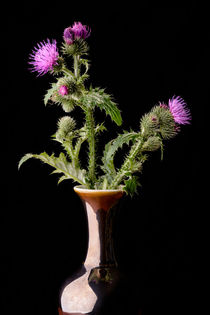 Thistle Flowers in Vase by maxal-tamor