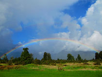Rainbow in New Zealand von nadini