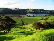 Grüne Landschaft in Neuseeland von nadini
