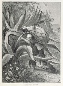 Extracting Pulque, from 'The Ancient Cities of the New World' by Edouard Riou