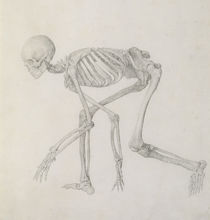 Human Skeleton: Lateral view in Crouching Posture von George Stubbs
