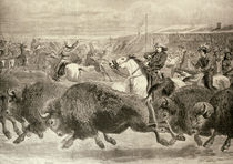 The 'Wild West' at the Great American Exhibition: Hunting Bison and Wapiti Deer von English School