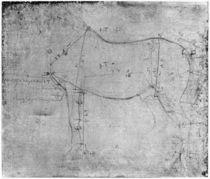 Study of a Horse by Leonardo Da Vinci