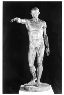 Flayed body von Jean-Antoine Houdon