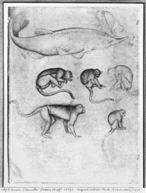 Six Monkeys and a Sturgeon von Antonio Pisanello