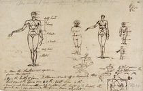 Studies of anatomy with measurements and writing von James Ward