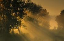 Morgenlicht by Norbert Maier