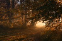 Oktoberlicht by Norbert Maier