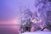Winterstille von Norbert Maier