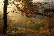 Herbst im Isartal by Norbert Maier
