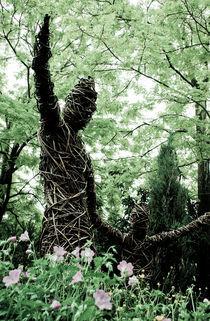 Into the Woods von Claudio Ahlers