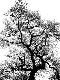 Tree in Winter von Claudio Ahlers