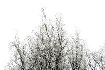 Winter Frost von Claudio Ahlers