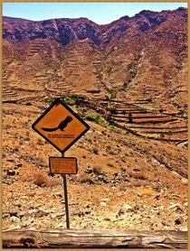 Travel Fuerteventura von Sandra Vollmann