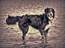 Berner Sennenhund in schwarz und weiß 3 by kattobello