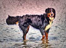 Retro Berner Sennenhund im Meer 2 von kattobello