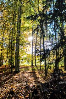 Spring - Forest Illumination von Chris Berger