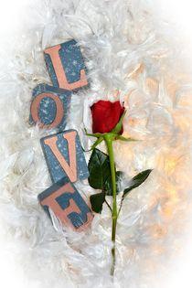 Die Rose der Liebe by Claudia Evans