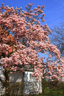 Frühling in der Stadt by Bernhard Kaiser