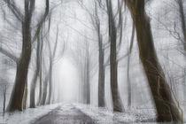 Winter von Stefan Kierek
