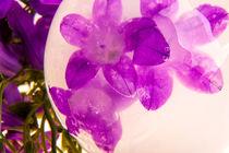Glockenblume in kristallklarem Eis 2 by Marc Heiligenstein