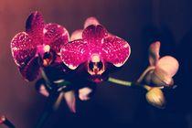 Be My Valentine by Heidi Piirto