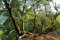 Der Wald am Felsgrat by Ronald Nickel