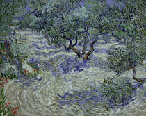 Vincent van Gogh / Olive Grove by AKG  Images