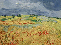 Van Gogh / Fields with Blooming Poppies by AKG  Images