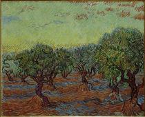 Van Gogh / Olive hain by AKG  Images