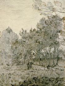 V. van Gogh, Garden of St Paul's Hospital by AKG  Images
