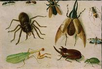 Jan van Kessel d. Ä., Insekten by AKG  Images