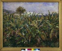 A.Renoir, Champ de bananiers von AKG  Images
