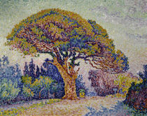 Signac / Stone pine in Saint-Tropez/1909 by AKG  Images