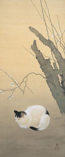 Hishida Shunso, Katze und Pflaumenblüten von AKG  Images