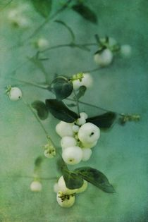 'Snowberries' by Priska  Wettstein