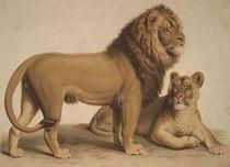 Der Löwe / aus: Charakterbilder von AKG  Images