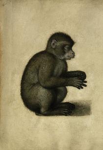 Monkey / Watercolour, attrib. to A.Dürer by AKG  Images
