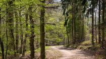 Frisches helles Grün bringt der April in den Wald by Ronald Nickel