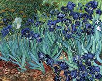 van Gogh / Irises / 1889 by AKG  Images