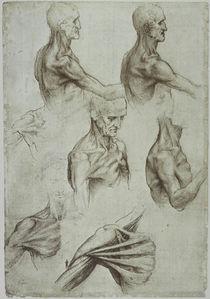 Leonardo / Hals– Schultermuskulatur/f. 136v von AKG  Images