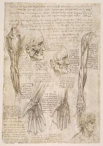 Leonardo / Arm– Hand– Gesichtsmuskel/f142v von AKG  Images
