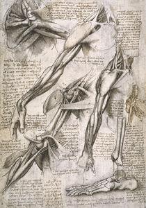 Leonardo / Schulter– Armmuskel/Fuß/f. 144 v by AKG  Images