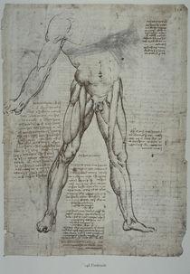 Leonardo / Oberschenkelmuskulatur/f. 148 r von AKG  Images