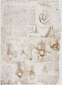 Leonardo / Fötus u. a. / fol. 197 r von AKG  Images