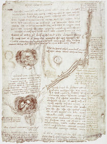 Leonardo / Ellbogen / Fötus im Uterus/f. 196v von AKG  Images