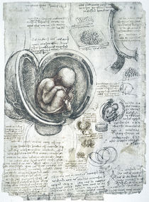 Leonardo / Fötus Uterus Steißlage/f. 198 r von AKG  Images