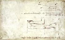 Vinci / Arm und Hand / Studie / fol. 26 r von AKG  Images