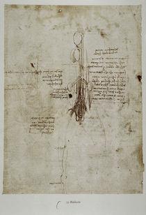 Leonardo / Pferd innere Organe / fol. 35 v von AKG  Images
